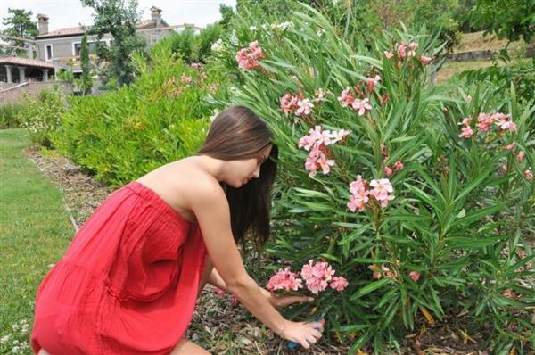 oleander schneiden tipps
