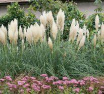 Pampasgras – die flauschige Trendpflanze aus Südamerika wird zu angesagtem Interieur-Trend