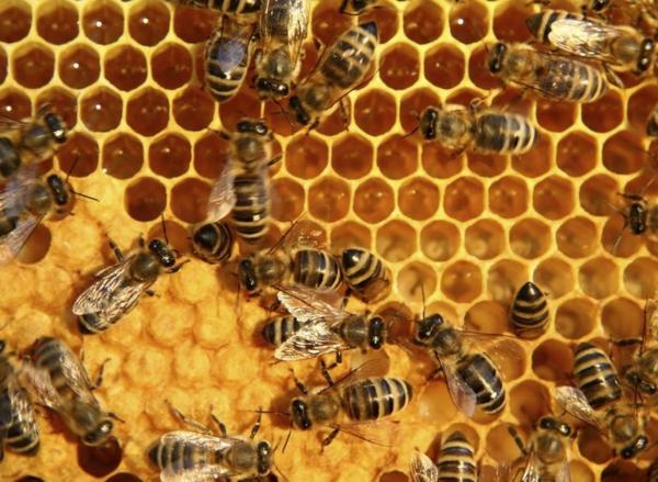 Bienenstock bauen Imker Bienen