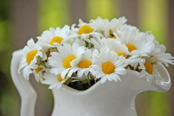 Margeriten weiße Blüten in einer weißen Porzellankanne