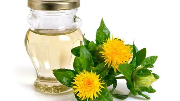 Saflorpflanze Blüten Distelöl gesundheitliche Vorteile