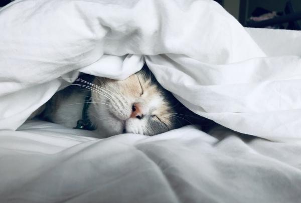 Ποια είναι η καλύτερη θέση ύπνου για εσάς Πλεονεκτήματα, μειονεκτήματα και συμβουλές που κοιμάται η γάτα κάτω από την κουβέρτα