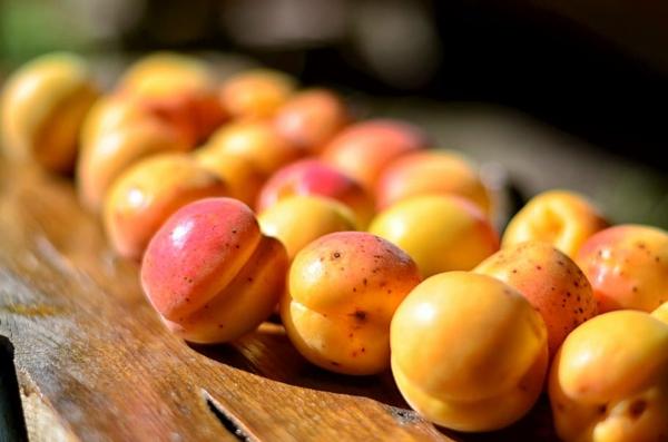 bio aprikosen frische früchte nährwerte
