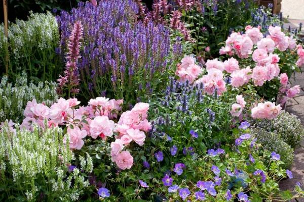 rosen und rosenbegleiter im garten