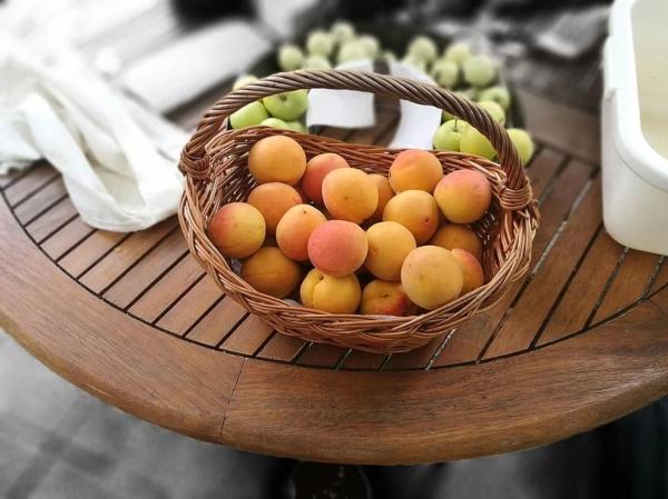 gesunde ernährung frische aprikosen
