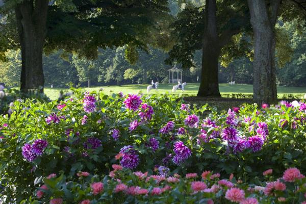 Gartenblumen für pralle Sonne Blütenmeer im Park Blütenpracht der Natur