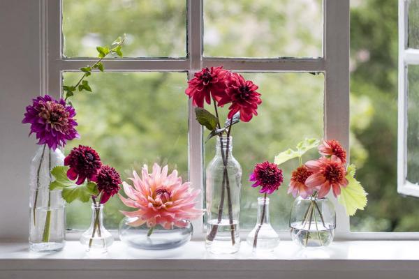 Gartenblumen für pralle Sonne Dahlien verschiedene Farben der Blüten