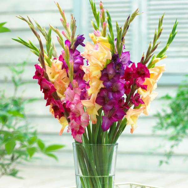 Gartenblumen für pralle Sonne farbenfrohe Gladiolen in der Vase Schmuck fürs Zuhause für lange Zeit