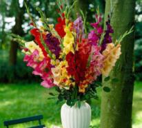 Sonnenanbeter unter den Gartenblumen – diese fühlen sich wohl in praller Sonne