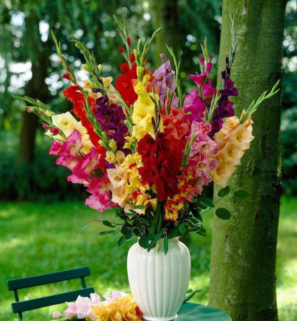 Gartenblumen für pralle Sonne farbenfrohe Gladiolen in weißer Vase passender Schmuck für den Kaffeetisch im Freien