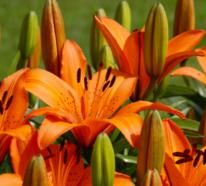 Die schönsten und seltensten Blumen der Welt – welche kennen Sie?