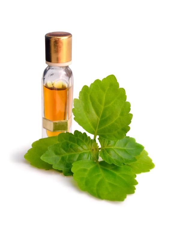 ätherisches Patchouli Öl Duft Vorteile Blätter