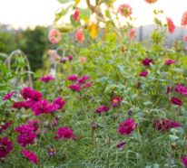Herbstpflanzen: 7 winterharte Pflanzen sorgen für einen Farbenrausch im Garten