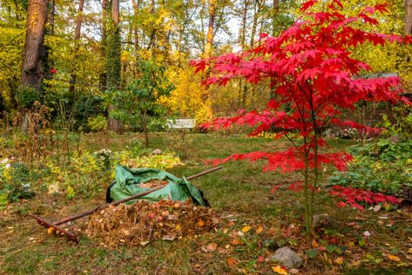 Der Herbst steht vor der Tür Diese Arbeiten stehen jetzt an 7