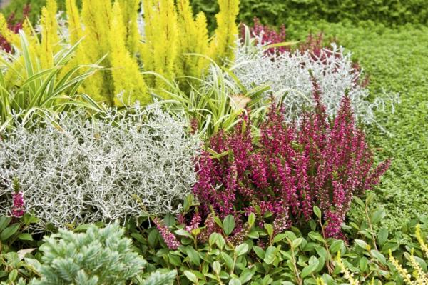 Heidekraut Gartenpflanzen Herbst Herbstpflanzen winterhart