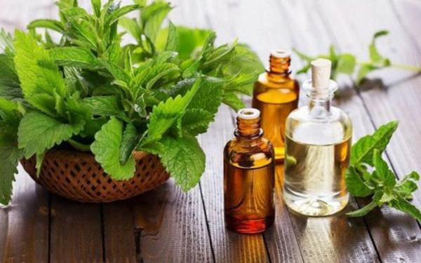 Patchouli Öl Vorteile Blätter Blüten