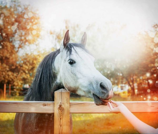 Pferdeleckerlies selber machen Hauspferden
