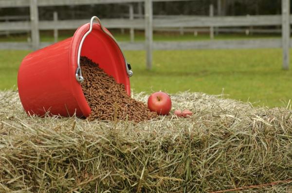 Pferdeleckerlies selber machen Pferdeleckerlis Ideen