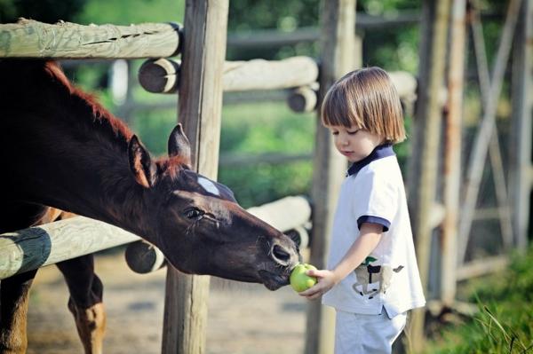 Pferdeleckerlies selber machen Pferdeleckerlis backen Kind Hauspferd