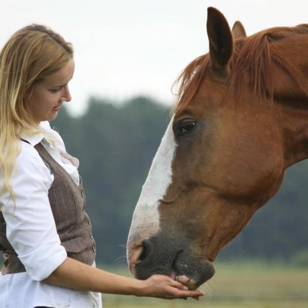 Pferdeleckerlies selber machen gebackene Pferdeleckerlis Hauspferd