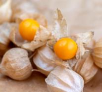 Physalis – exotisches Obst in orange Lampions gehüllt