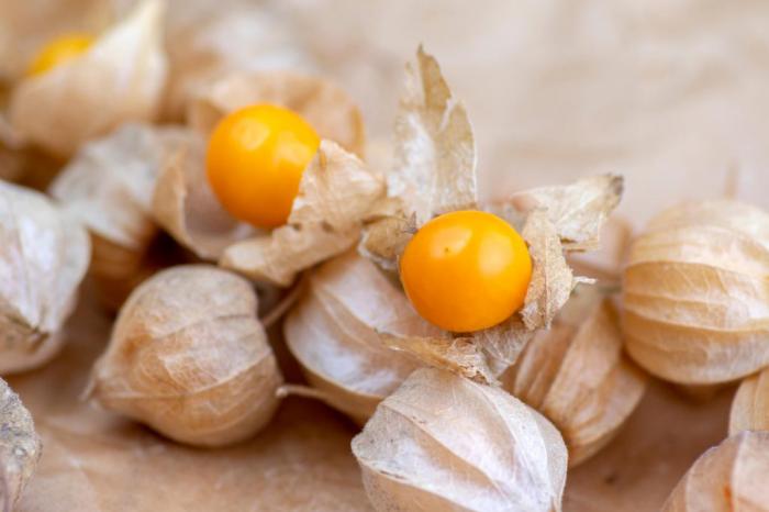 Physalis exotisches Obst kleine orangefarbene Früchte in dünnen Hüllen