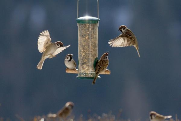 Vogelfutterspender selber bauen Gartenvögel futtern Ideen