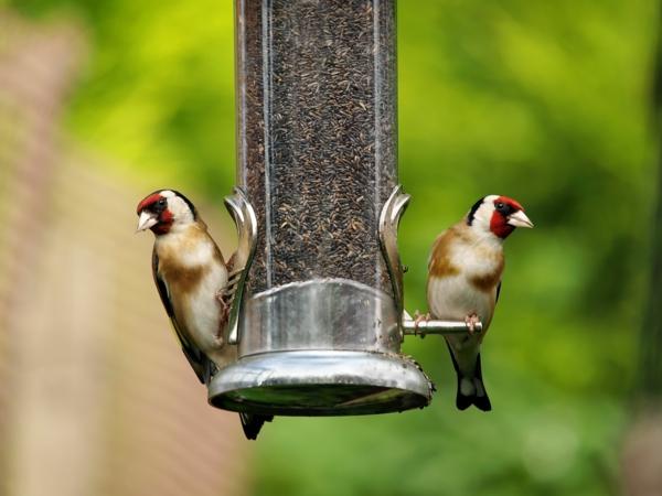 Vogelfutterspender selber bauen Vögel futtern