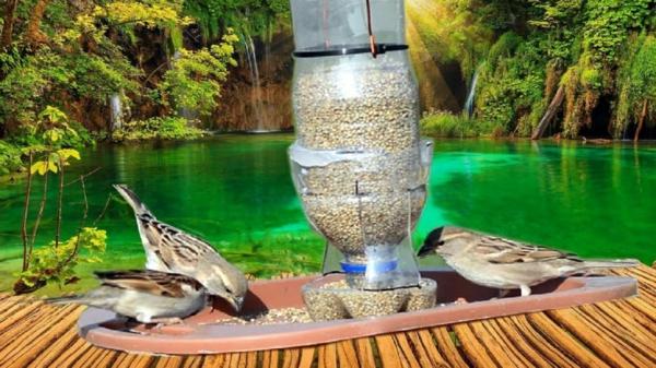 Vogelfutterspender selber bauen aus Plastikflasche Gartenvögel