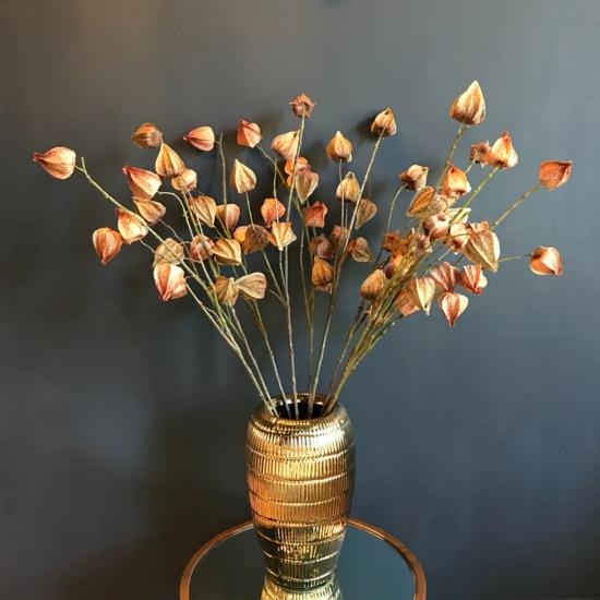 getrocknete lampoionblume physalis herbstdeko