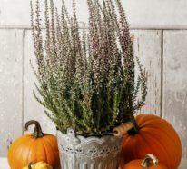 Dekoideen mit Heidekraut – Bringen Sie den Herbst nach Hause mit diesem zarten Stimmungsmacher!