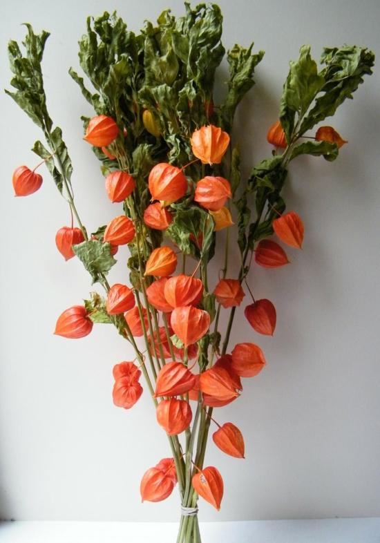 lampionblume herbst strauß