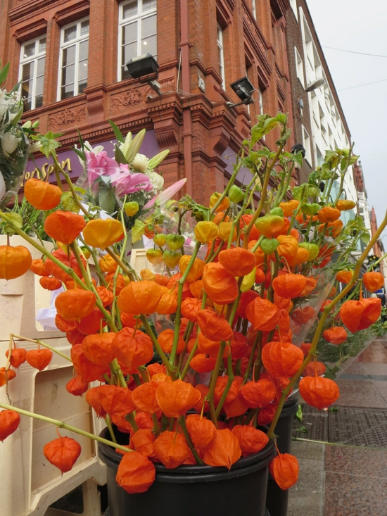lampionblume physalis herbstblumen herbstdeko