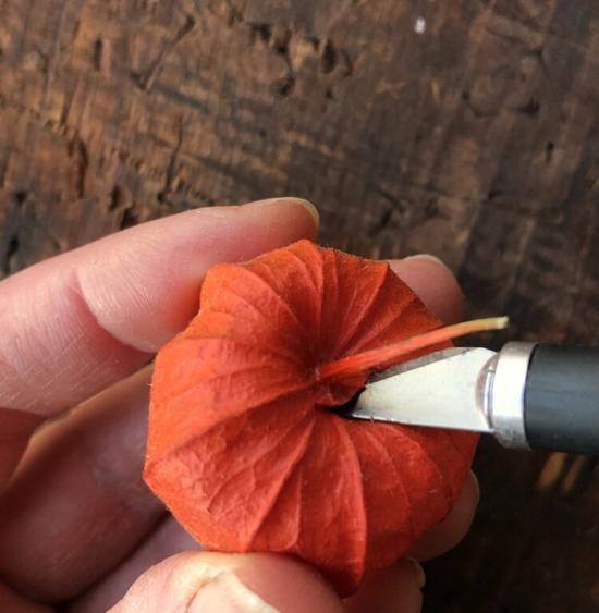 lichterkette selber machen mit lampionblume