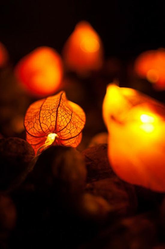 magische lichterkette basteln mit physalis lampionblume