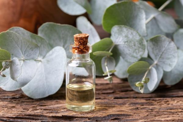 raumdüfte herbst eukalyptus