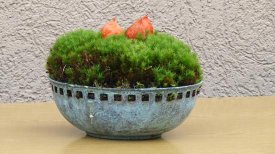 vintage herbstdeko lampionblume physalis
