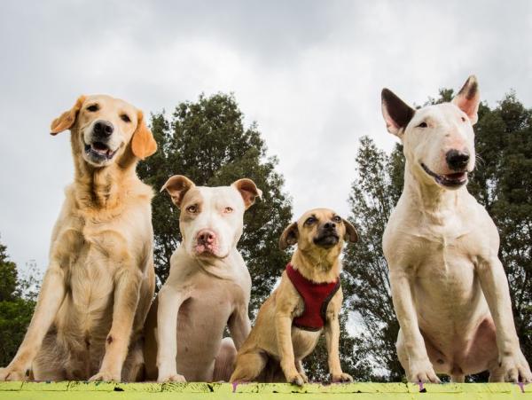 4 mittelgroße Hunde, in die Sie sich sofort verlieben werden verschiedene hunde größen rassen