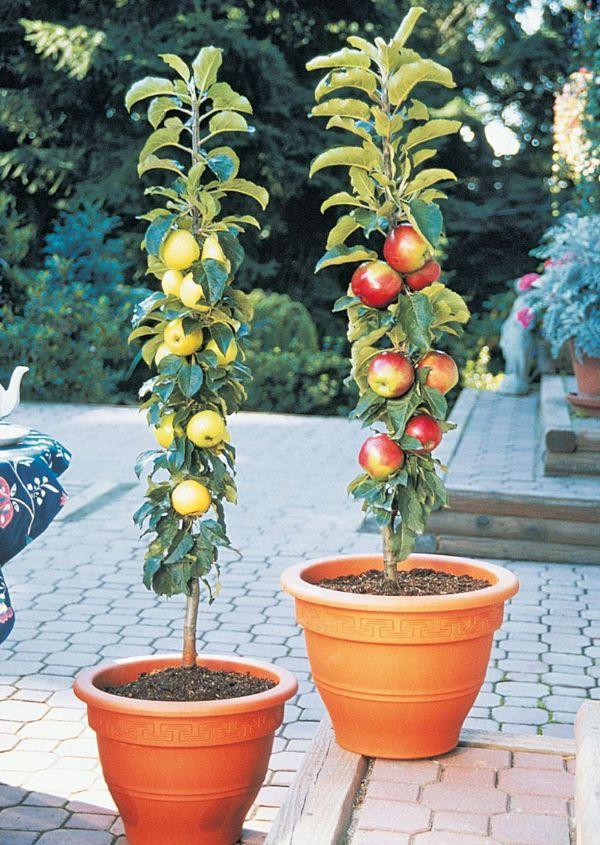 Blumentopf Ideen - einen schönen Apfelbaum pflanzen