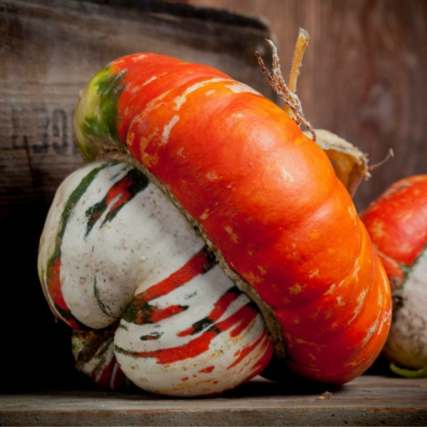 Red Turban zierkürbis essbare kürbissorten