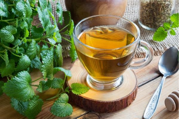 Zitronenmelisse Tee – Immunität und Psyche durch die Gaben der Natur stärken kräuter tee frisch garten