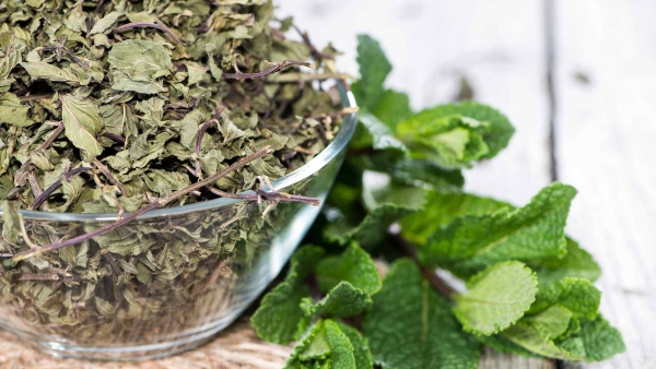 Zitronenmelisse Tee – Immunität und Psyche durch die Gaben der Natur stärken trockene melisse blätter tee