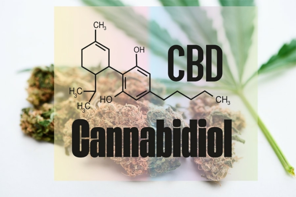 cbd cannabidiol vorteile