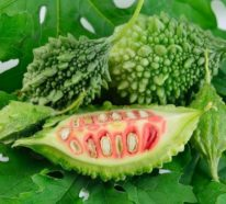 Bittergurke – das exotische Superfood und seine gesundheitsfördernde Wirkung