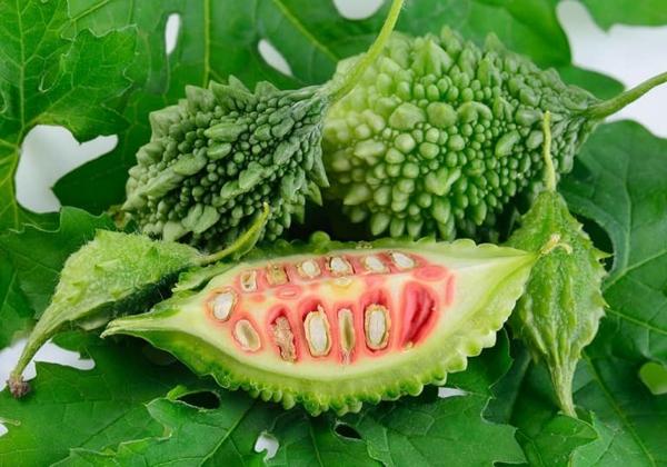 exotische frucht bittergurke gesund