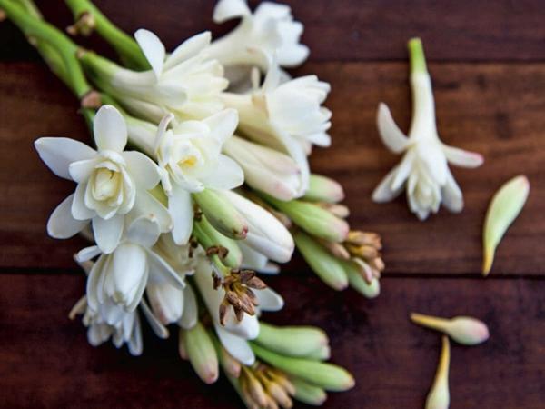 gepflückte tuberose blüten