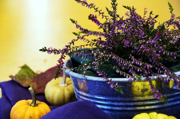heidekraut kürbisse herbstdeko herbstblues vertreiben