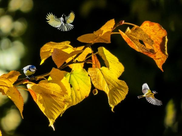 herbstblues vertreiben natur beobachten