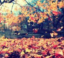 Herbstblues muss nicht sein! Mit diesen 7 Tipps, die trübe Stimmung vertreiben