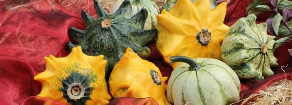kürbissorten Shenot Crowns zierkürbisse